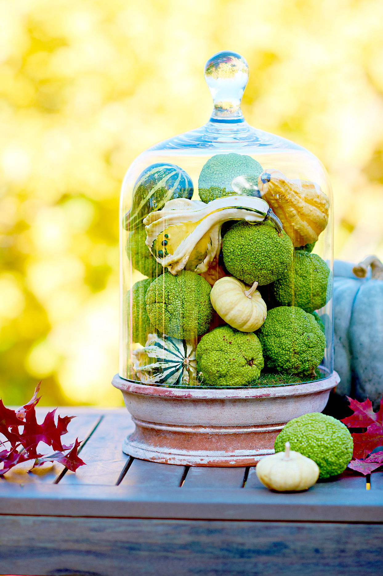 Hedge apples, pumpkins, and gourds in glass container