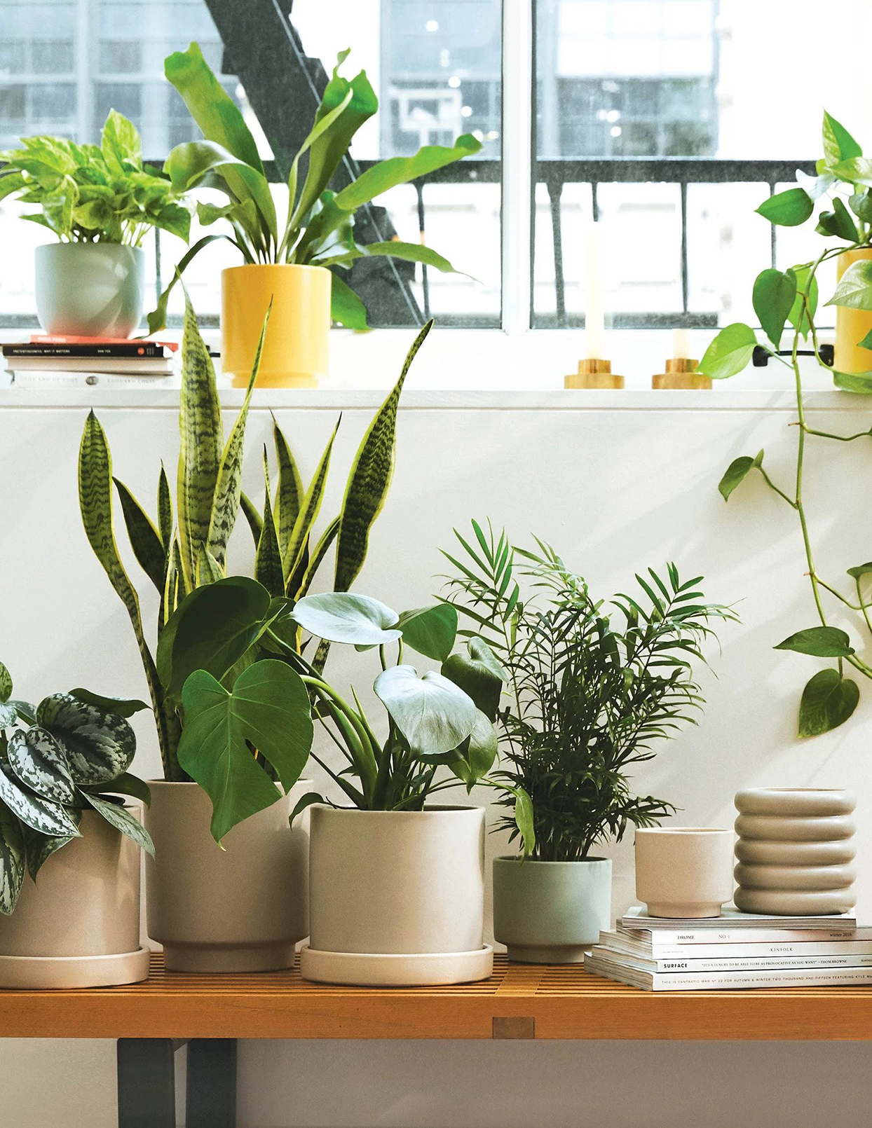 The Sill Now Offers Virtual Appointments to Solve All Your Houseplant Problems