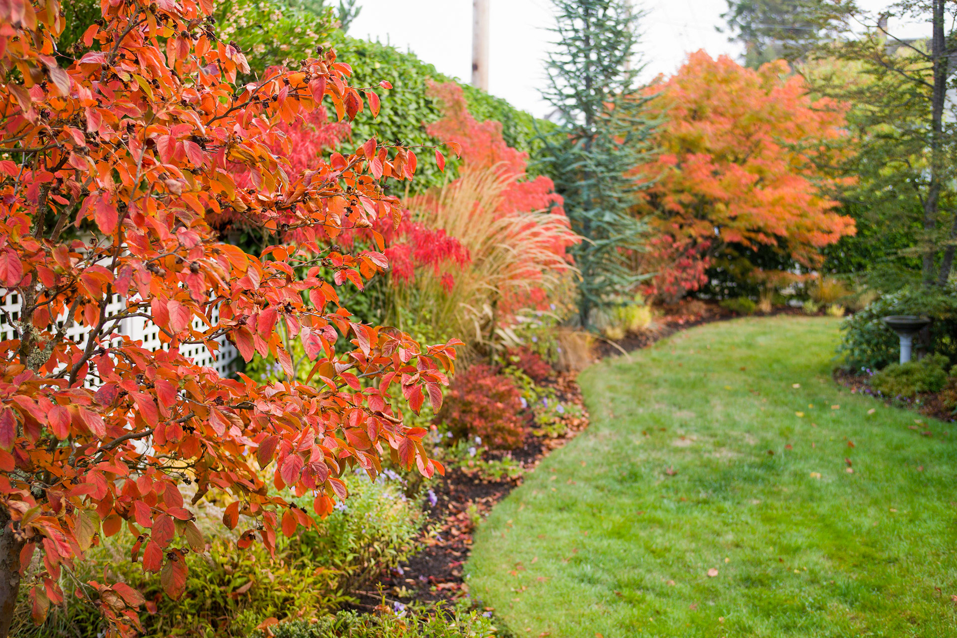 curved lawn path fall trees