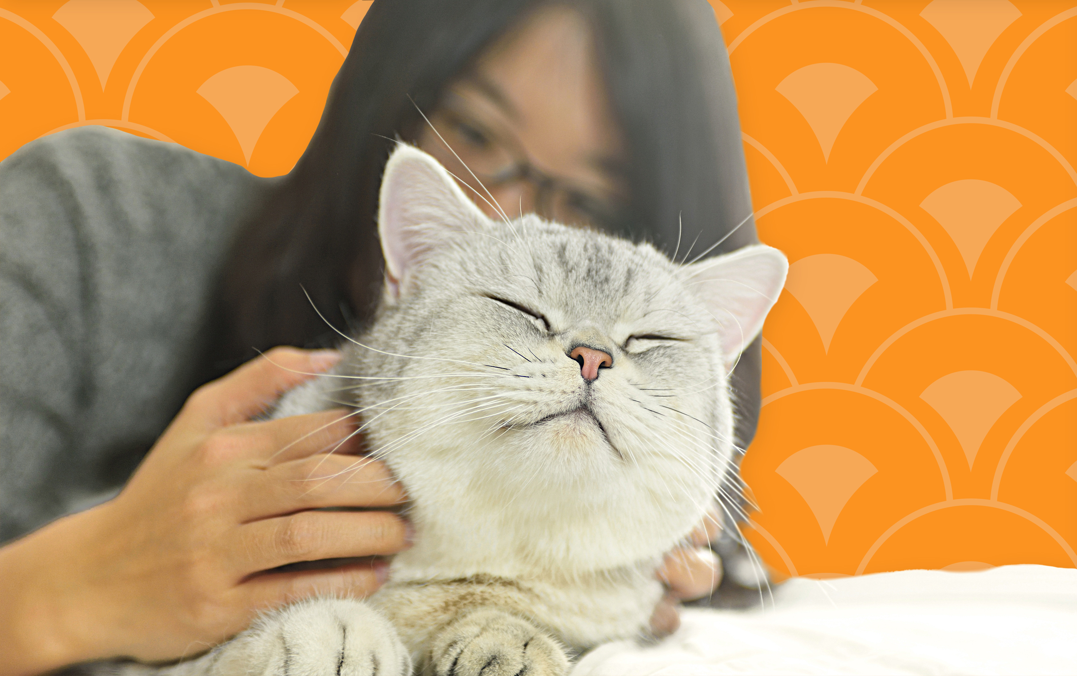 woman cuddling white and gray cat against orange background