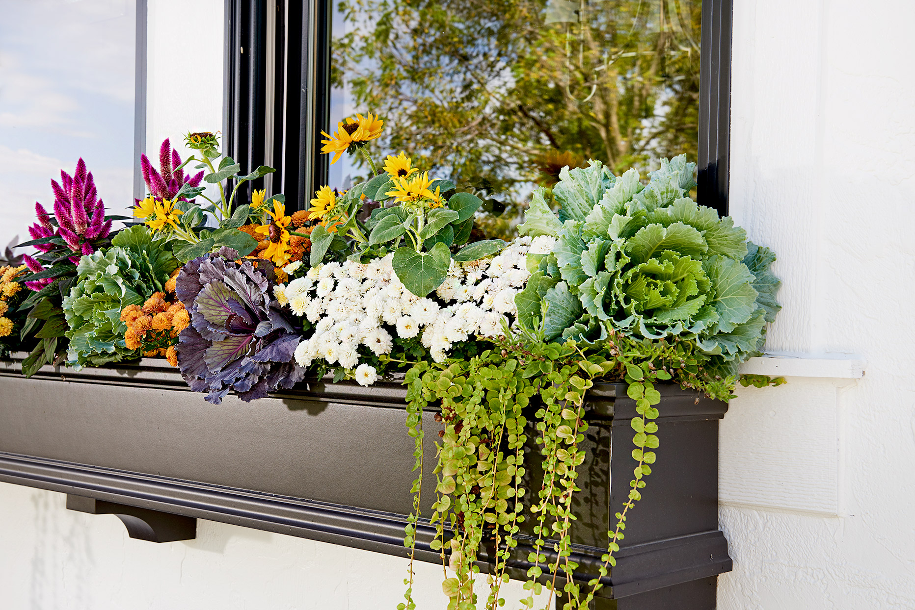 Window planter with variety of plants