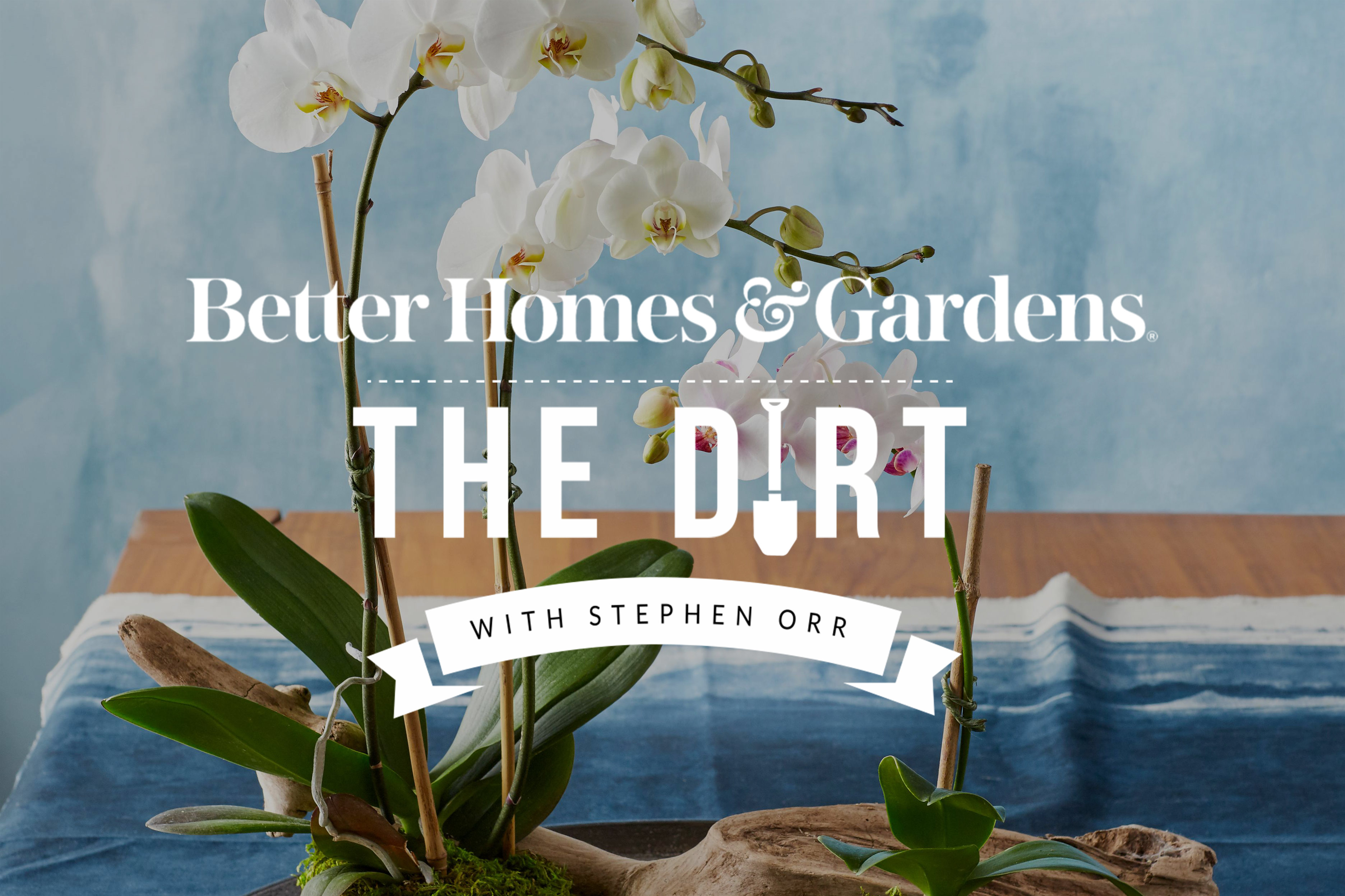 houseplants that are hard to grow the dirt