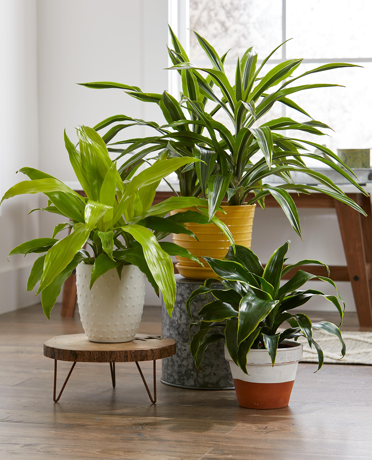 23 Easy Houseplants To Grow Better Homes Gardens