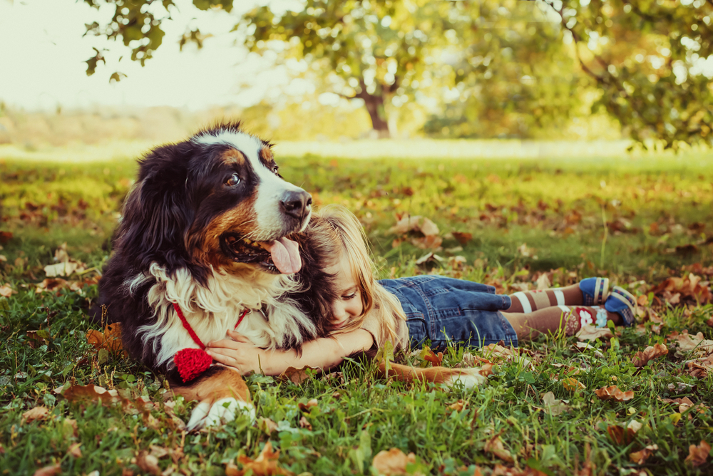 Which Dog Breed Is Right for Your Family?