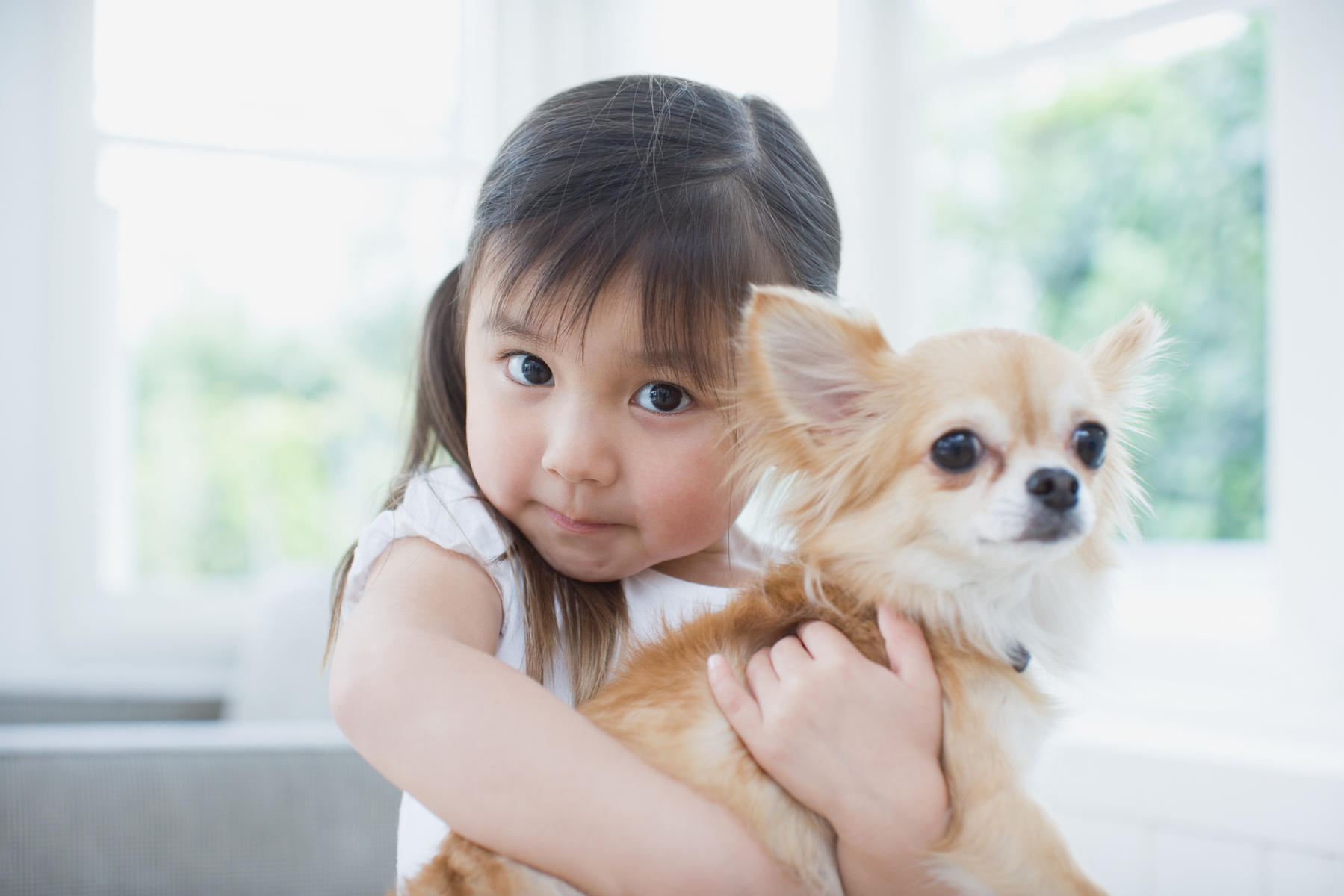The Dos and Don'ts of Getting a Family Dog