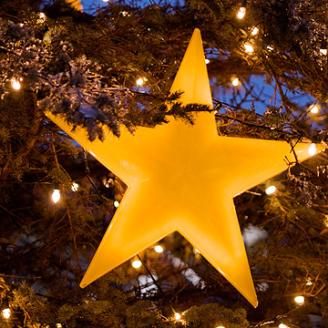 Gold star on pine tree