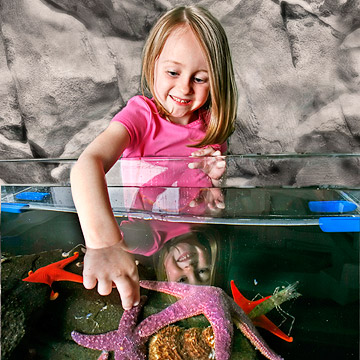 Animal Lovers: Pet the Fishes