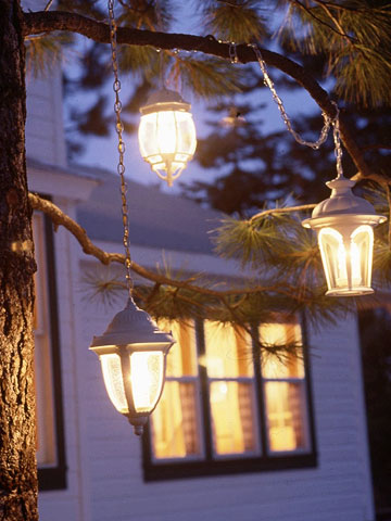 Glowing lanterns in pine tree