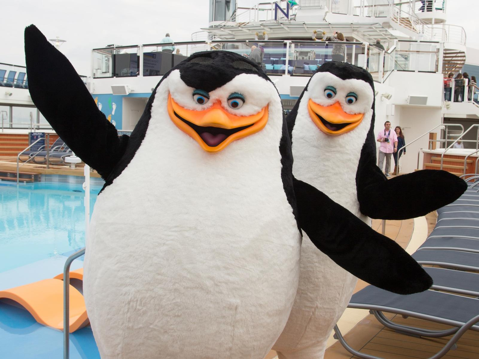 Family Cruise Lines Royal Caribbean International Penguins