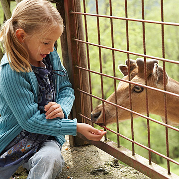 girl pettting zoo