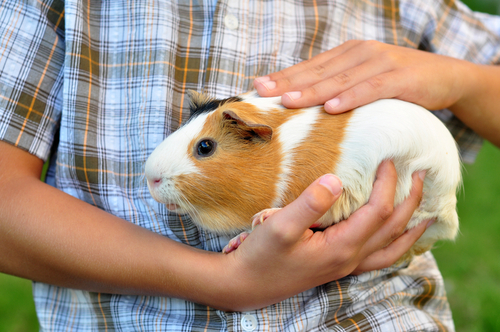 How Pets Can Help Kids With Autism
