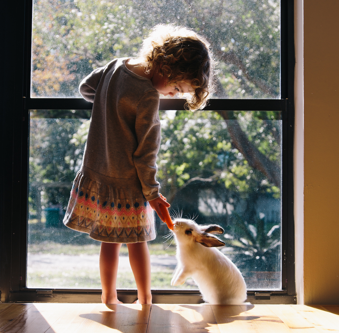 Picking the Perfect Pet: The Best Starter Pets for Families