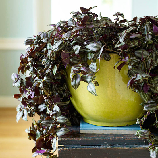 3. Rethink Your Houseplants