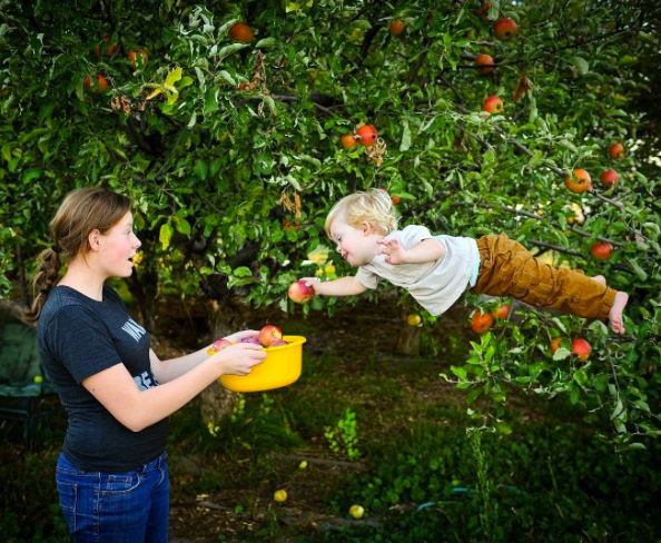 wil can fly picking apples