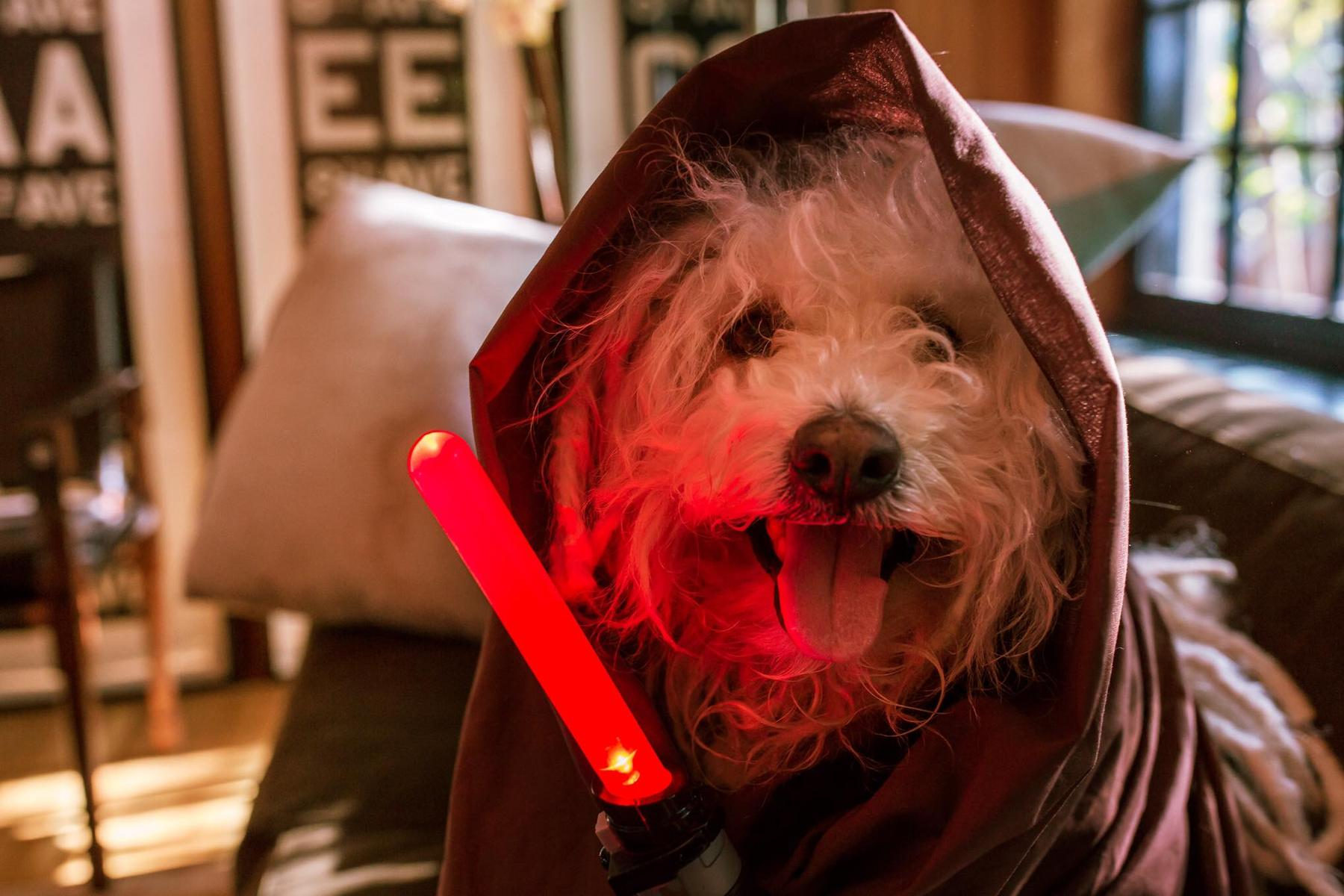 Beast dog Star Wars