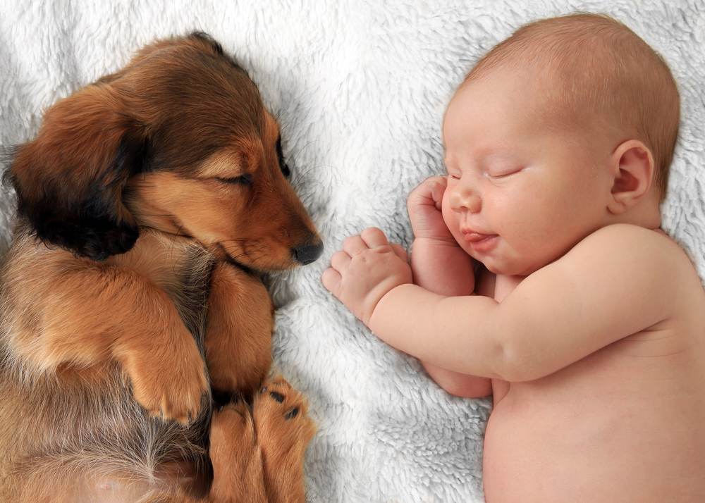 10 Things Babies and Puppies Have in Common