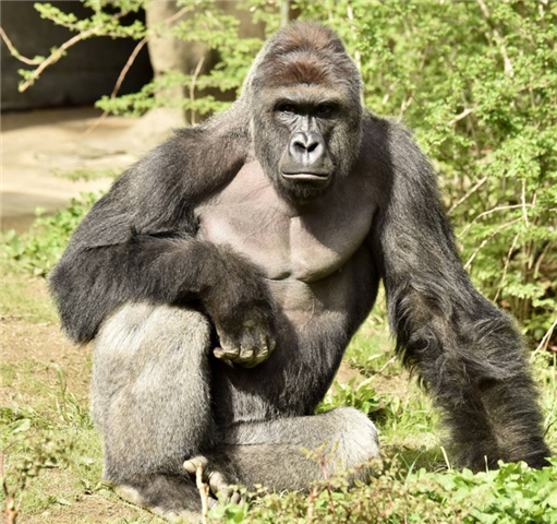 Let's Give the Mom in the Gorilla Incident a Break, Shall We?