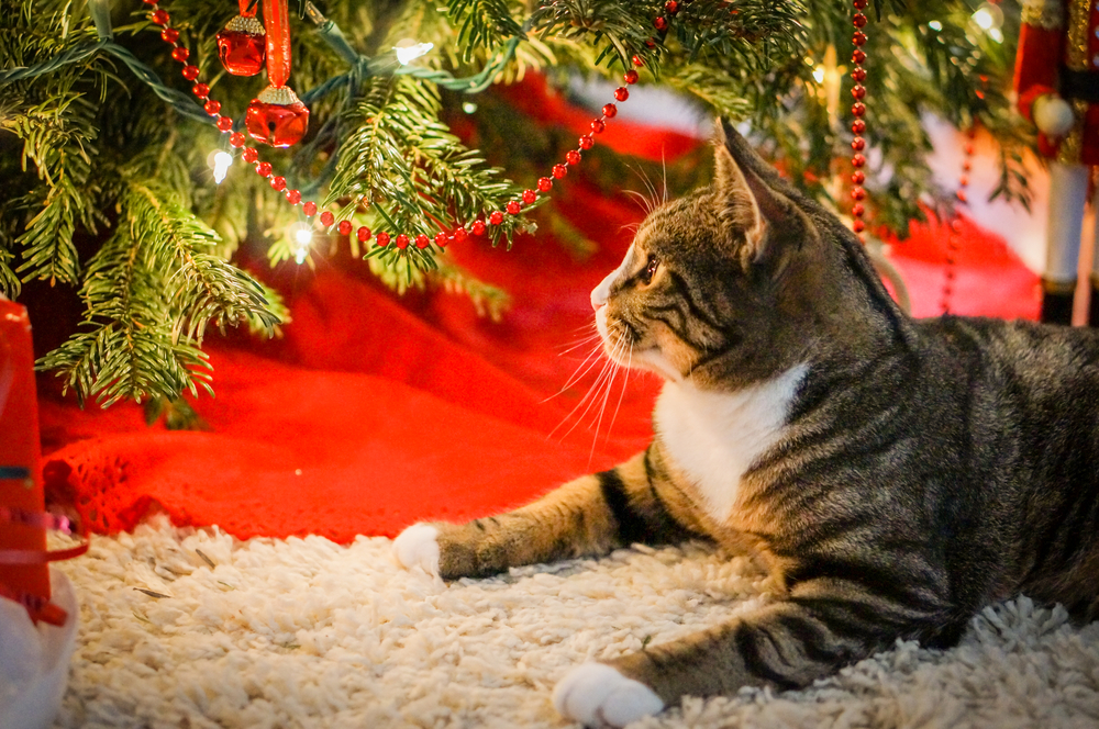 3 Ways to Pet-Proof Your Christmas Tree