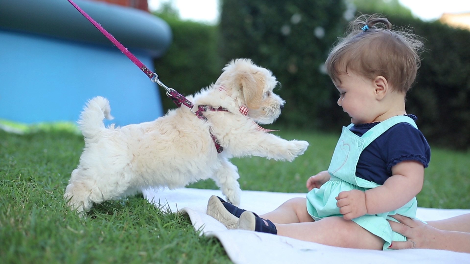 12 Differences Between Your Fur Baby And Your Real Baby