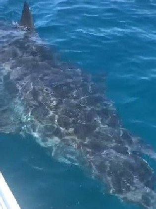 Watch As Family Gets Circled by an Enormous Great White Shark