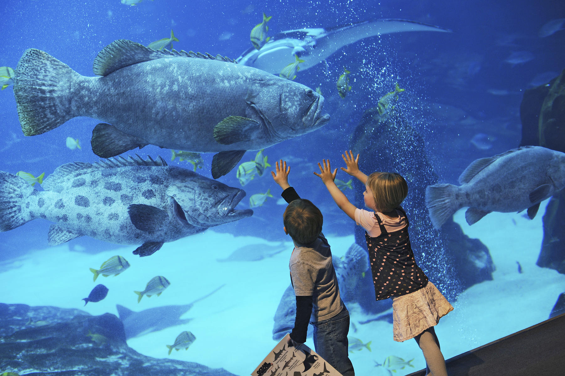 39 Kid-Friendly Tours That Take Families Behind the Scenes