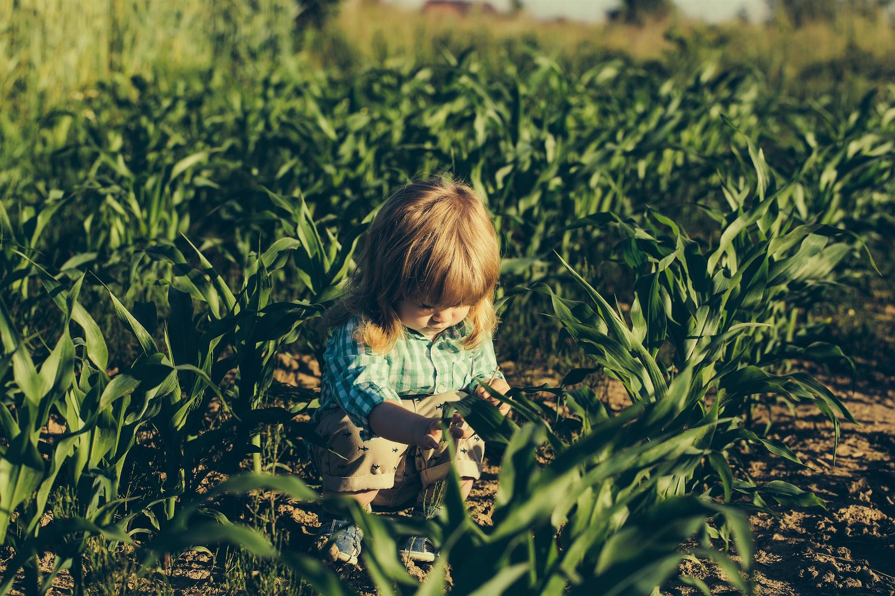 Missing 3-Year-Old Girl Found Sleeping in Cornfield After 12-Hour Search—With Loyal Dog by Her Side