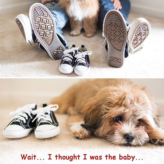 14 Funny Pregnancy Announcement Ideas