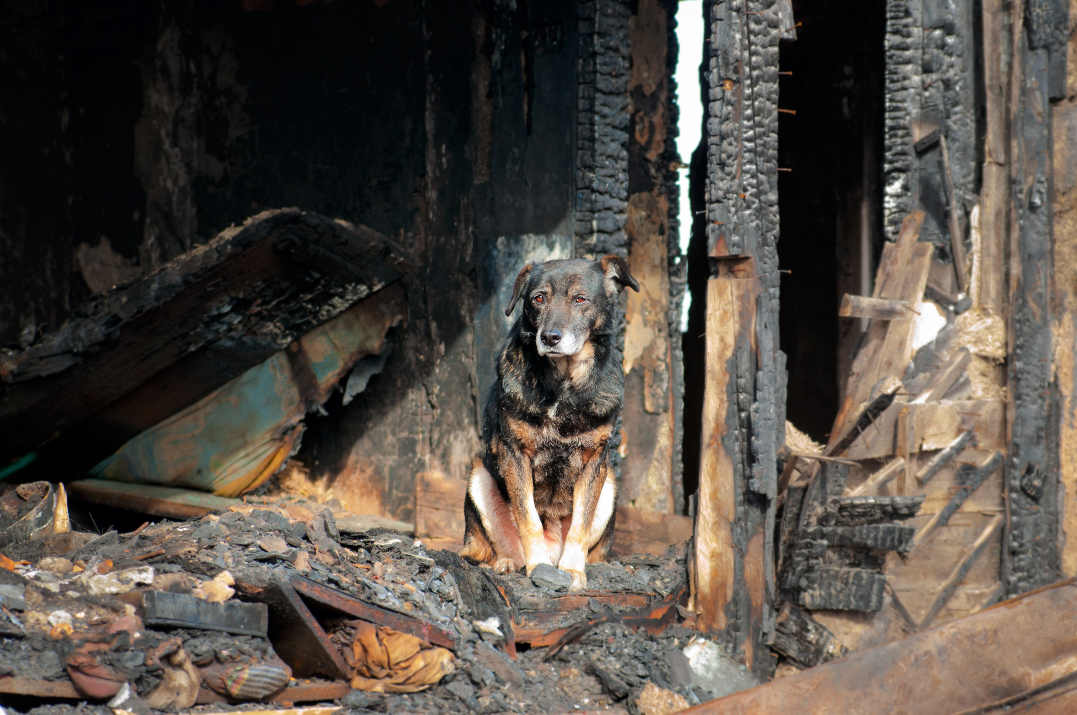Dog Sitting on Burned Down House Grounds