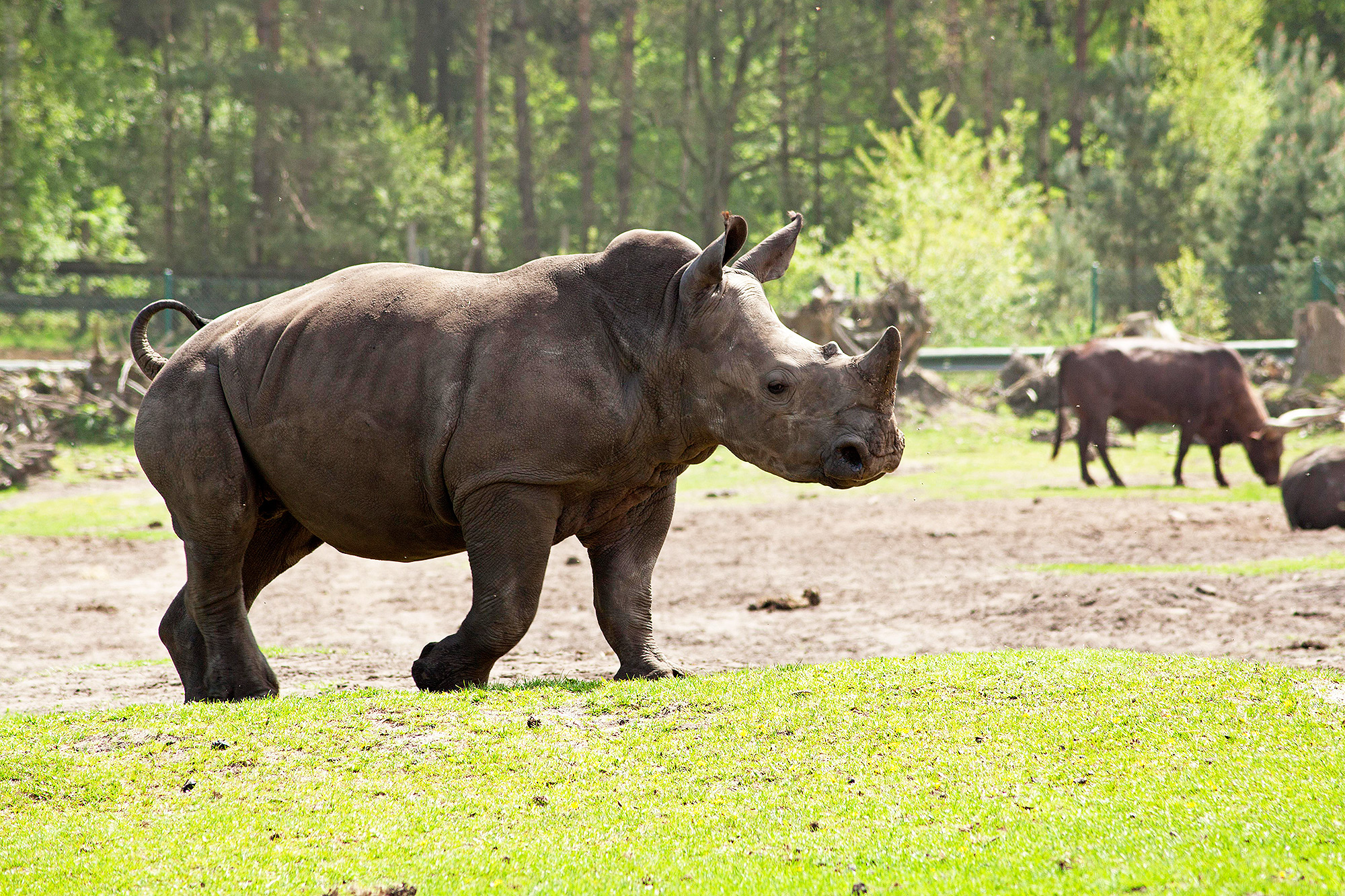 Toddler Who Fell Into Rhino Cage at Florida Zoo Suffered Lacerated Liver, Bruised Lung & Contusions