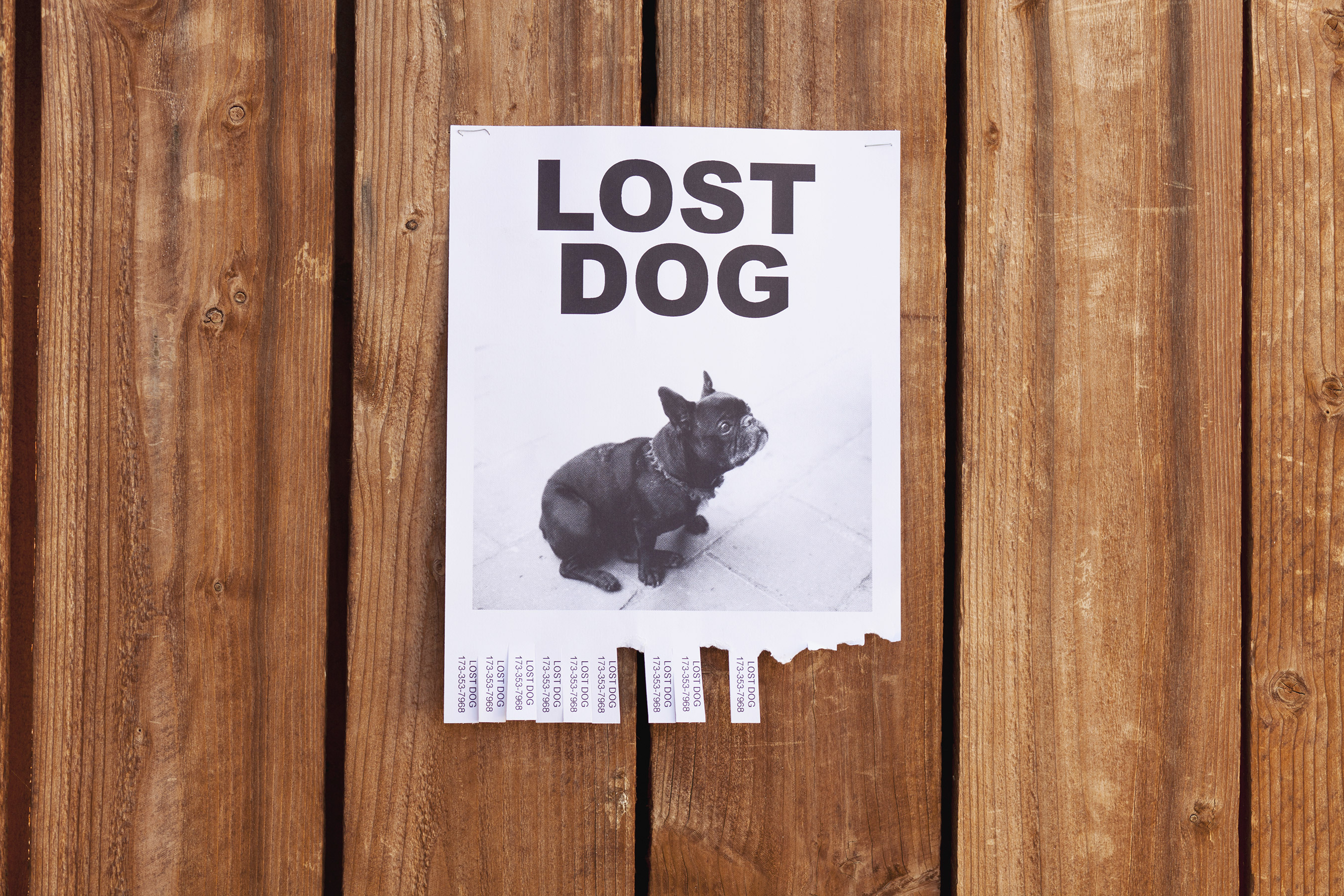 Lost Dog Flyer on Wood Wall