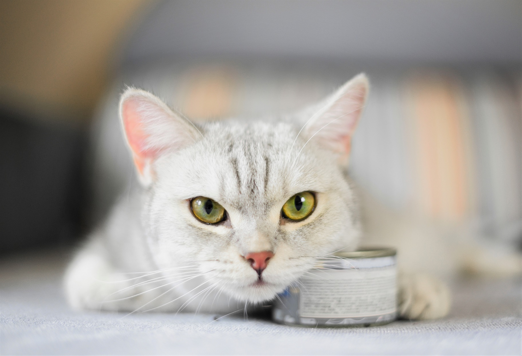 "Purina Issues Recall After ""Rubber Choking Hazards"" Reportedly Found in Cat Food"