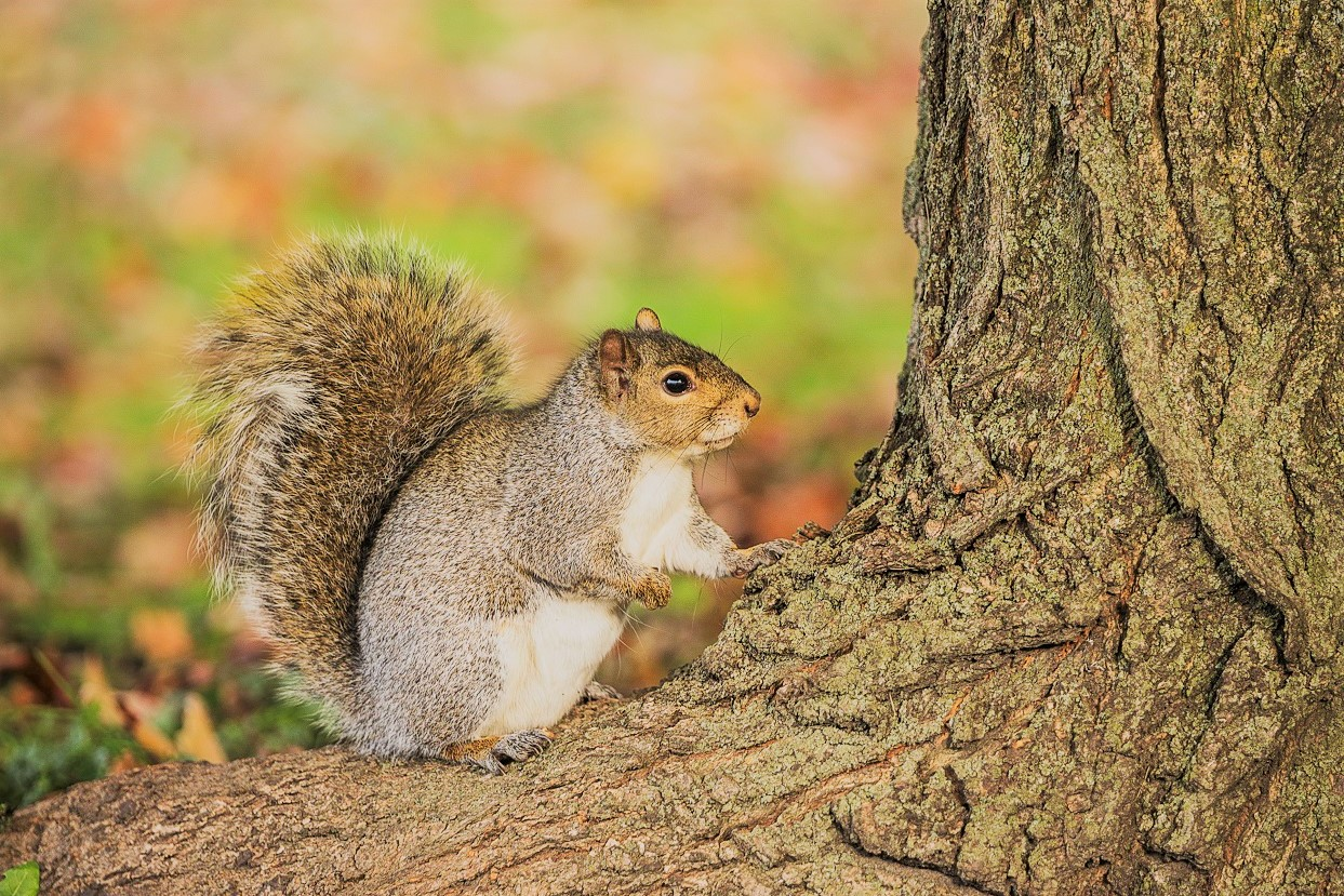 Squirrel Standing on Tree Around Leaves