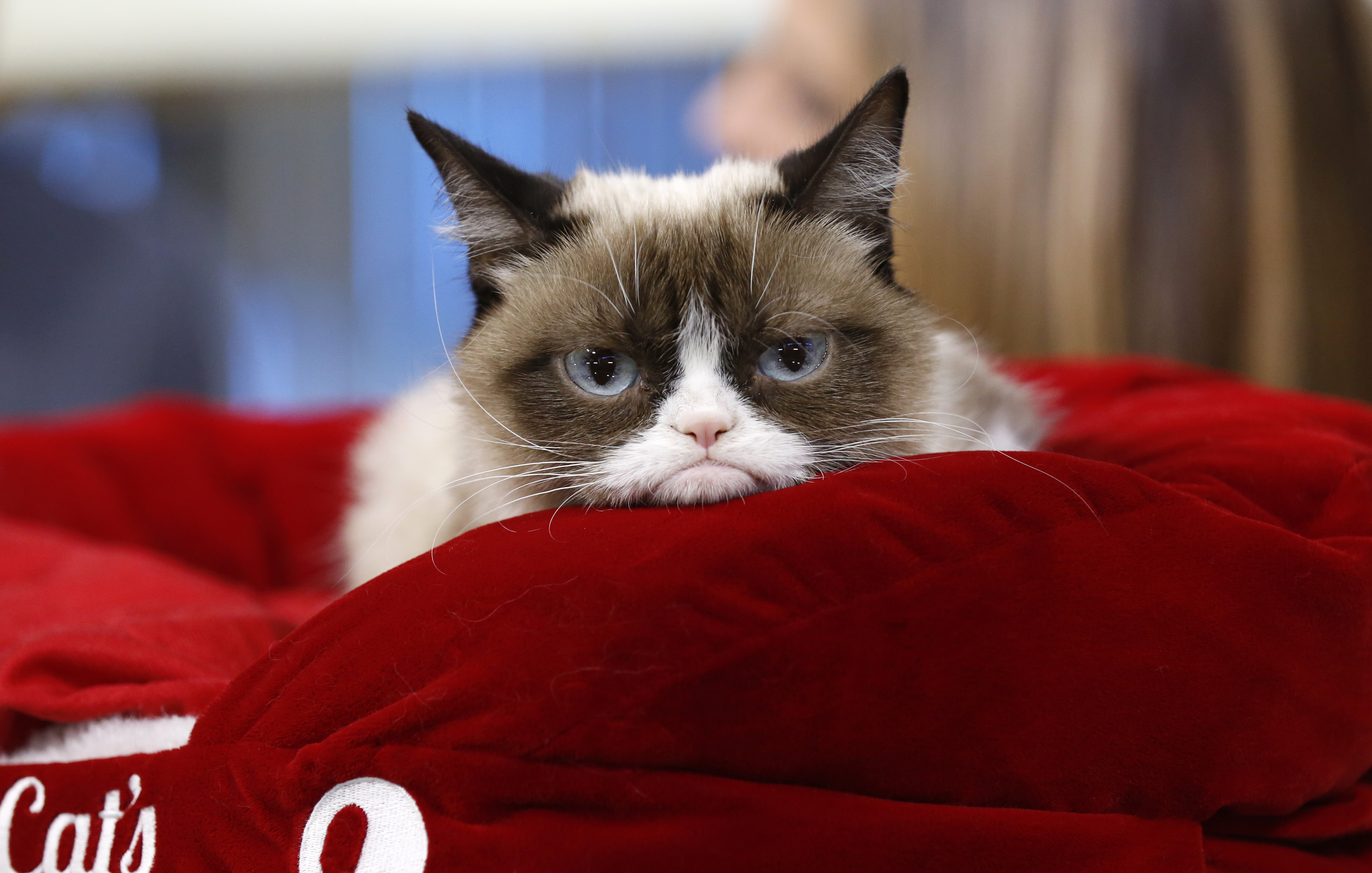 Grumpy Cat, the Internet's Favorite Forever-Frowning Feline, Has Died