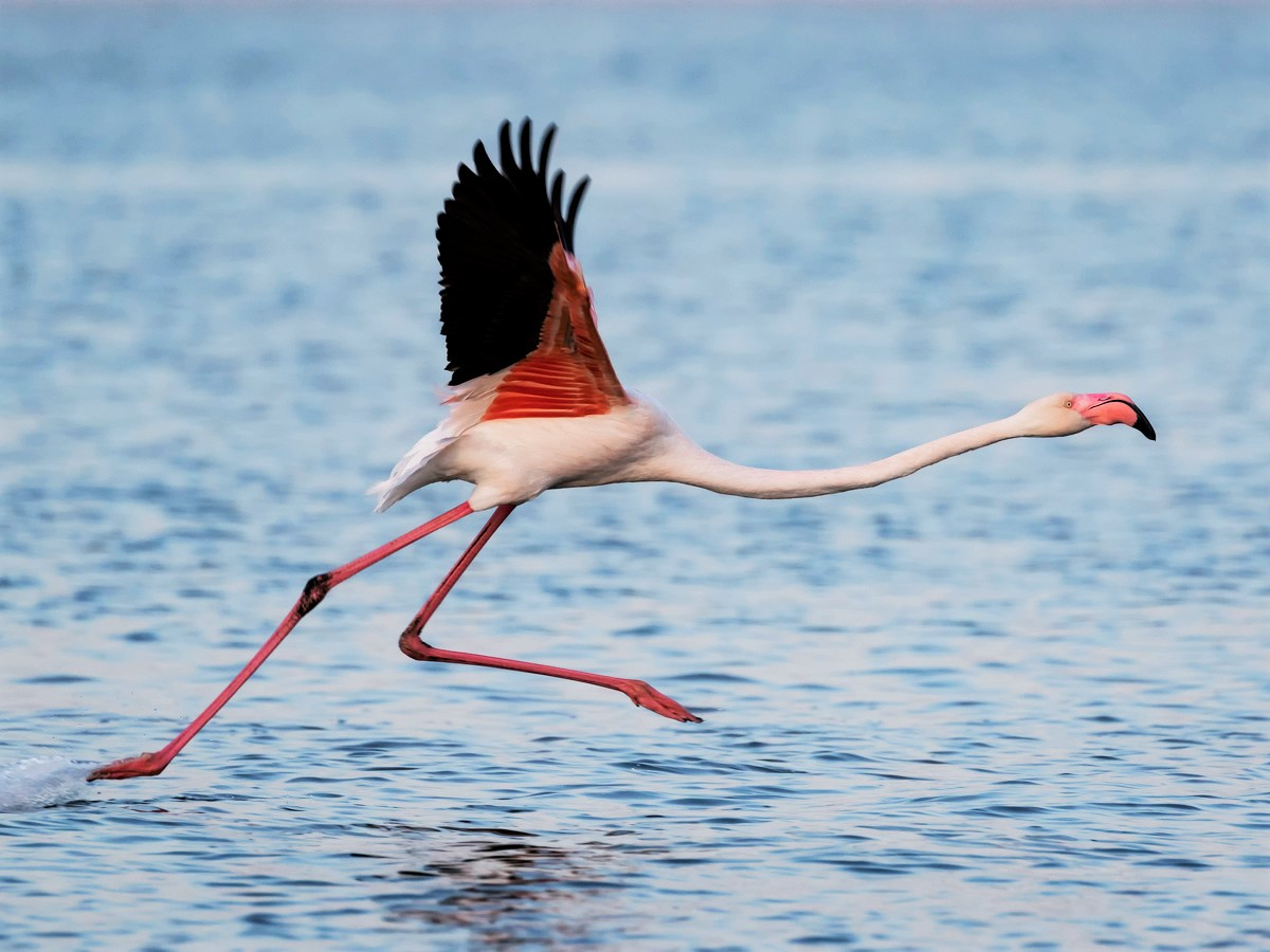 After Escaping a Kansas Zoo, Fugitive Flamingo Seen in Texas for the Second Time in 14 Years