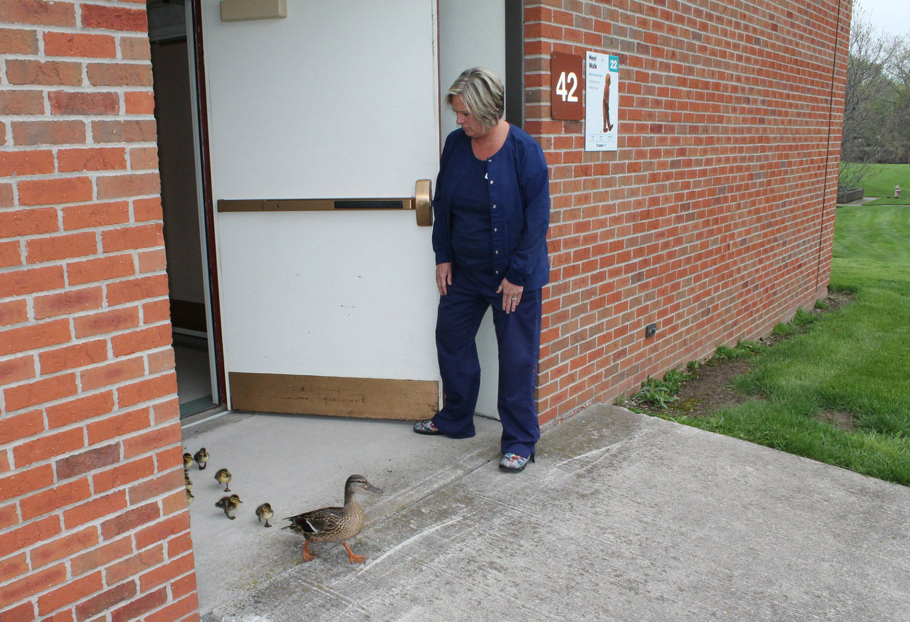 Duck Parade Through Hospital 2