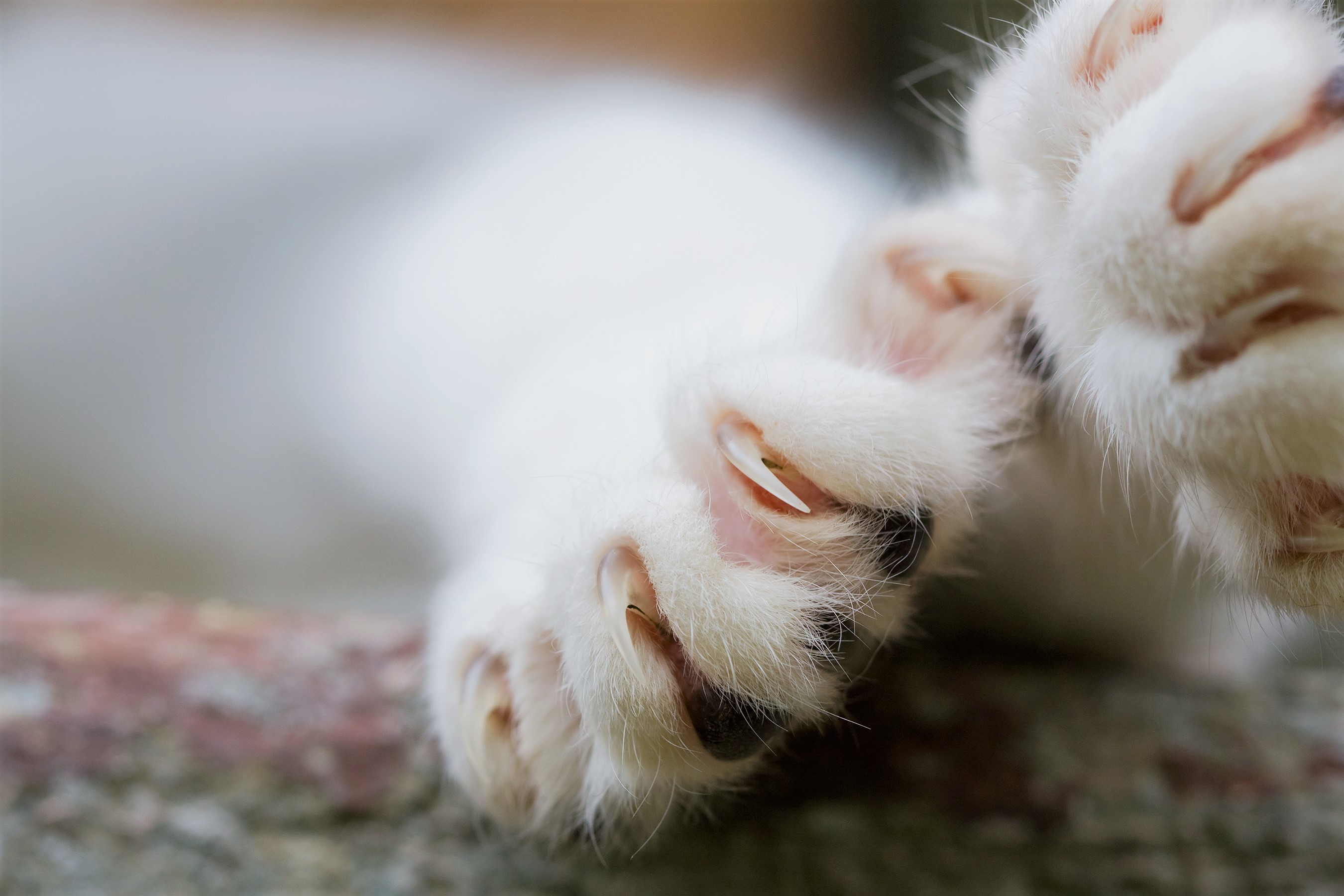 New York Could Become the First State to Ban Pet Owners from Declawing Their Cats