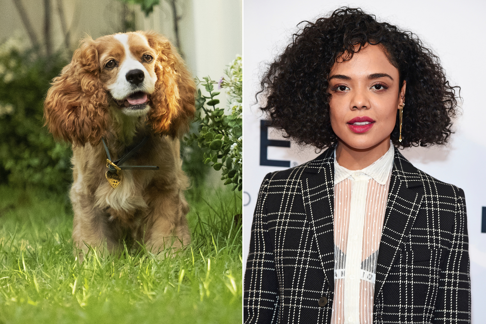 Live Action Lady and the Tramp Movie Tessa Thompson as Lady