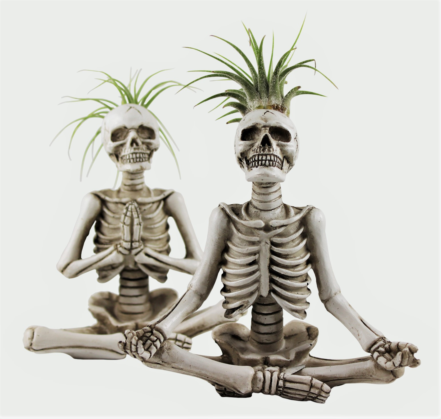 Trader Joe's New Yoga Skeleton Succulents Are This Year's Spookiest New Halloween Decoration