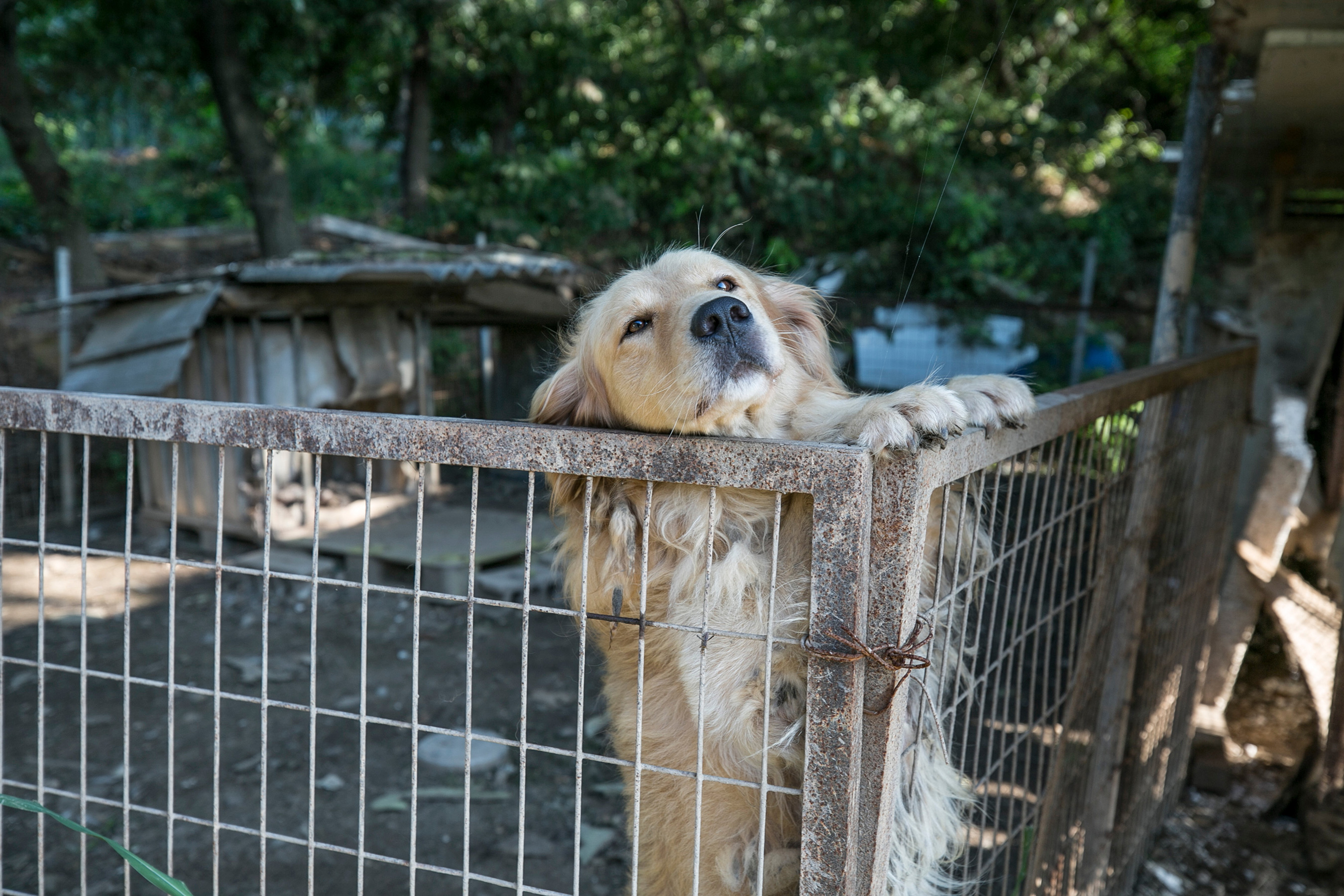 House Passes Bill to Make the 'Most Heinous' Animal Cruelty a Felony
