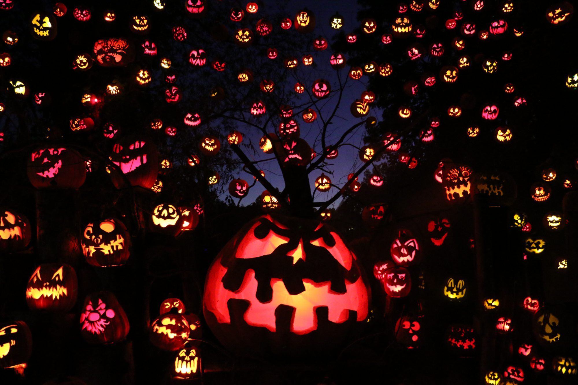 Halloween Activites 2020 Near Me 9 Halloween Activities Still Happening Near You in 2020 | Parents