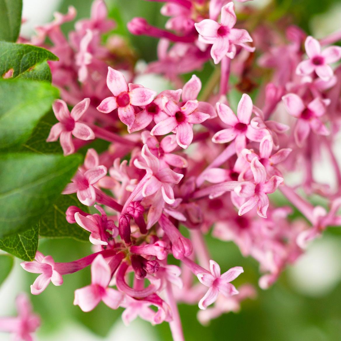 Repeating blooms