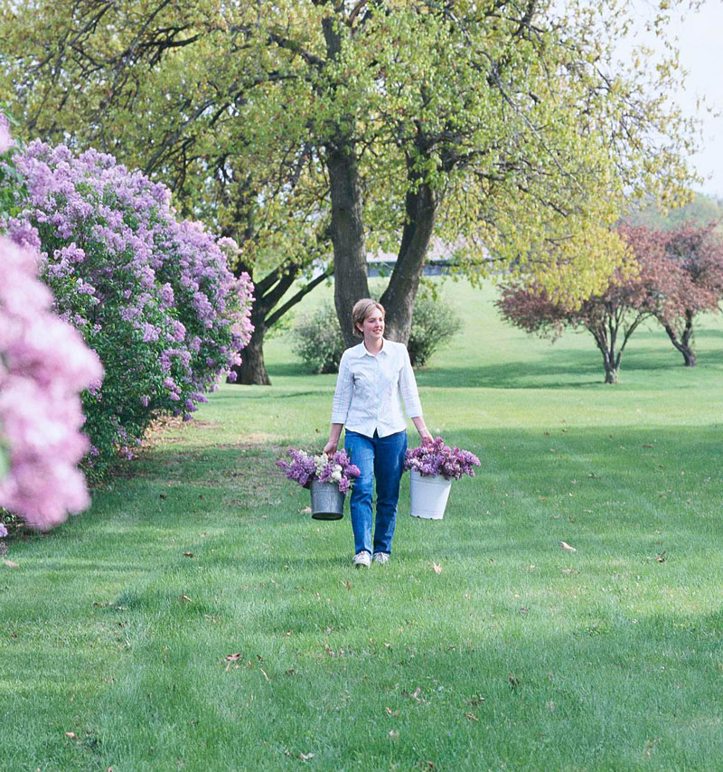Lilac festivals and parks