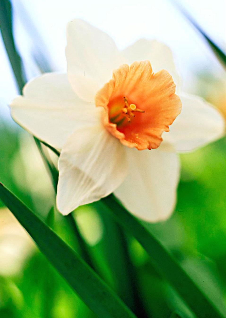 'Fragrant Rose': appealing fragrance