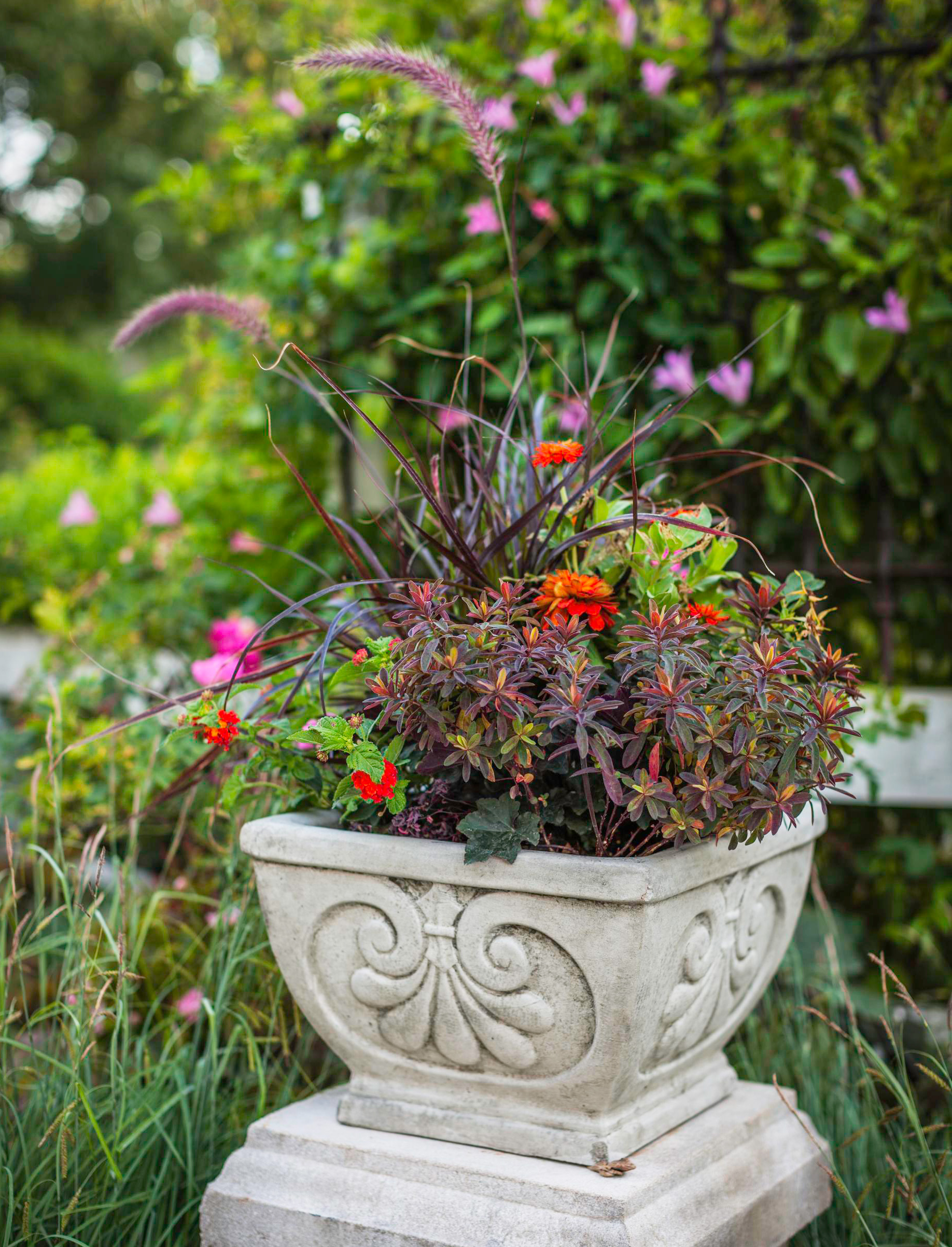 More on container gardens