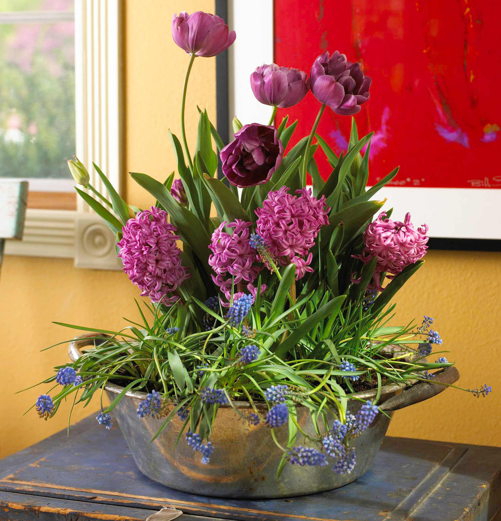 More indoor plant ideas and tips