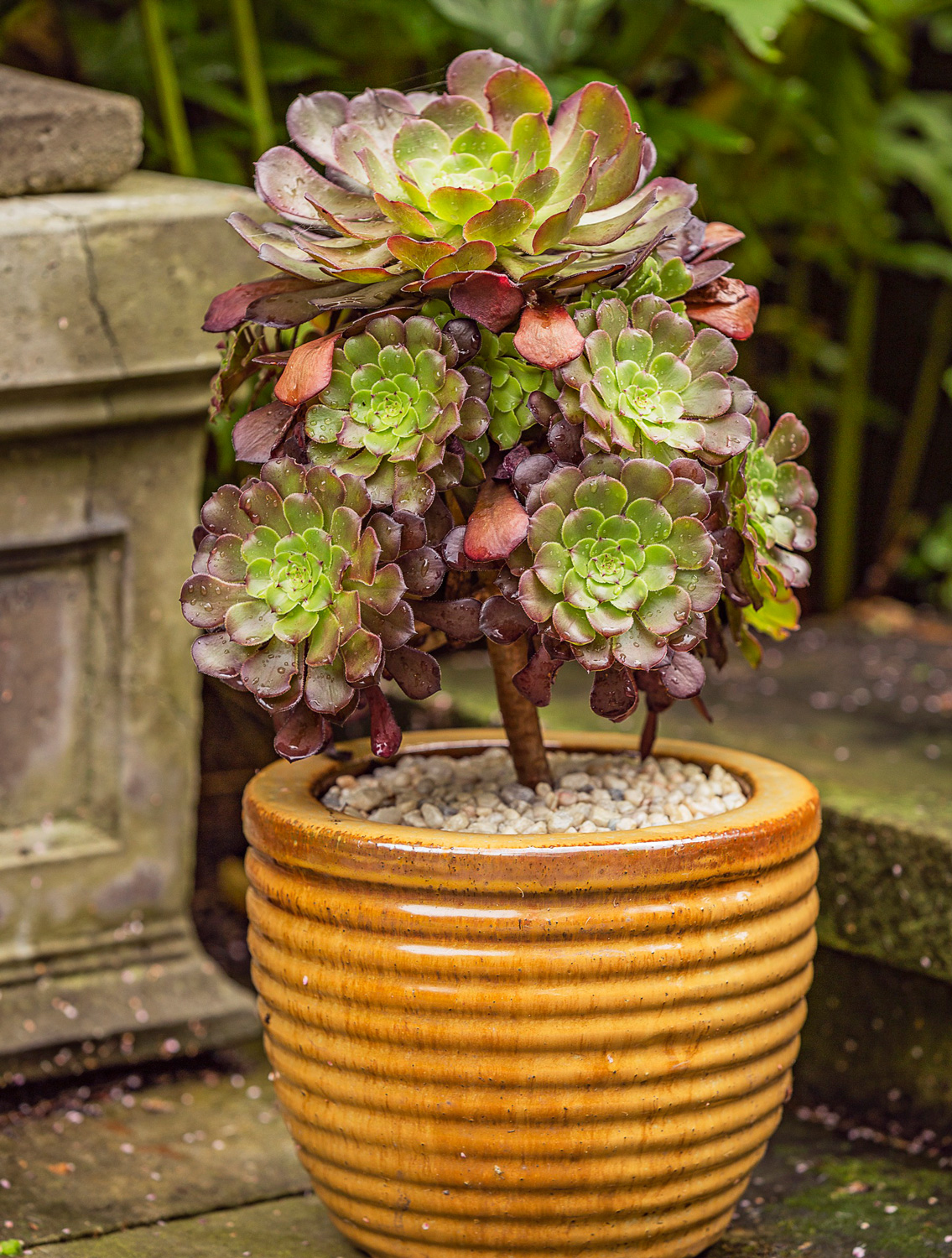 One-plant container garden