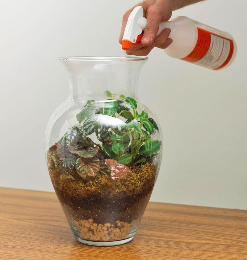 Create a terrarium: Add plants