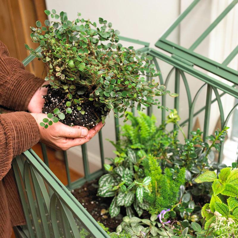 Caring for your terrarium
