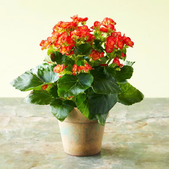 You want no-hassle blooms
