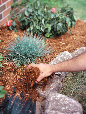 Mulch bare soil